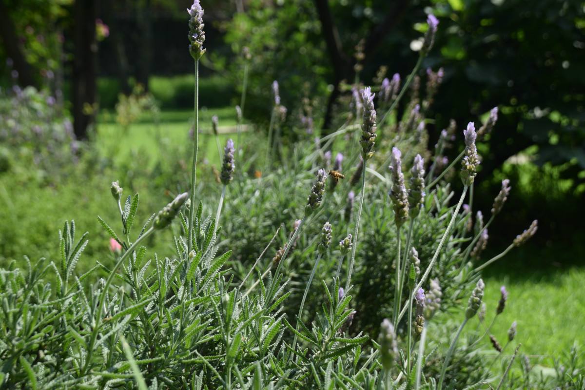naturaleza_hortilizas_02