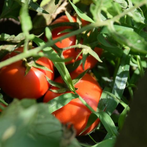naturaleza_hortilizas_06