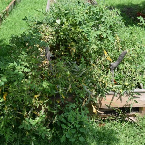 naturaleza_hortilizas_07