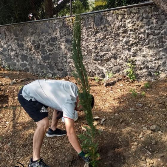 nuevos árboles (3)